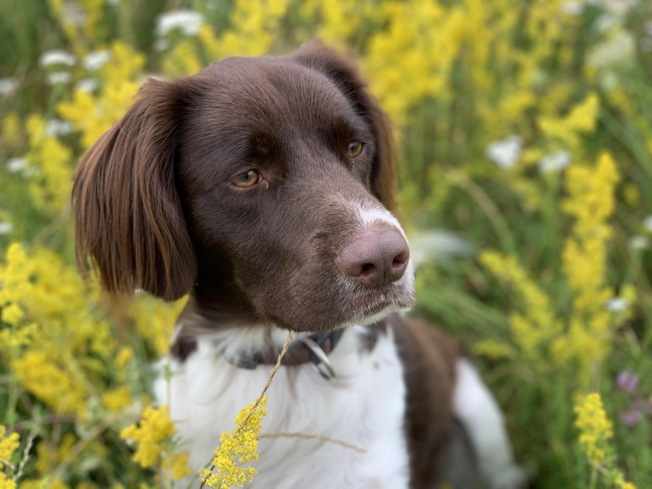 Foto von einem Haustier der klangtapete
